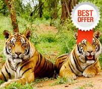jim corbett tour packages - tempo traveller hire
