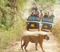 ranthambore tour packages - tempo traveller hire